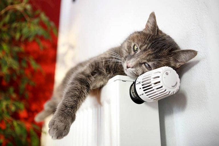 В Петербурге резко выросли продажи обогревателей, тепловентиляторов и даже ковров с подогревом